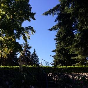 Washington Pines